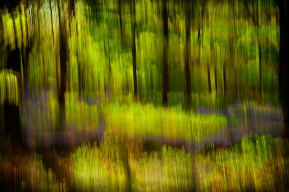 Burbage Woods (Abstract), May 2016
