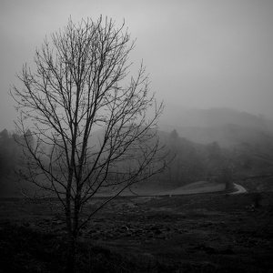 Elterwater in the mist 1, February 2020